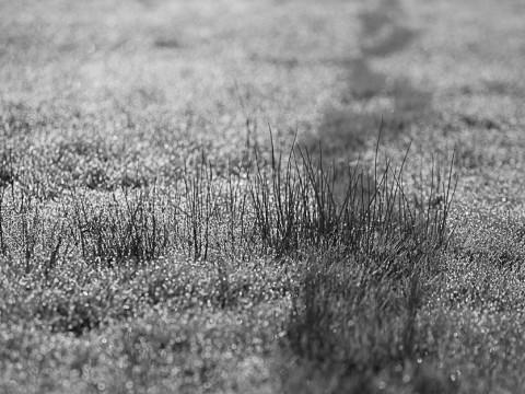 Spuren im Gras